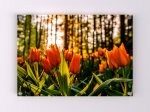 Tulip Field Acrylic Print - Available in A1-A4