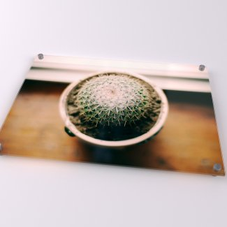 Cactus Acrylic Print - Available in A1-A4