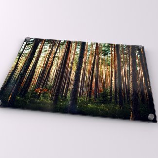 Woods Acrylic Print - Available in A1-A4